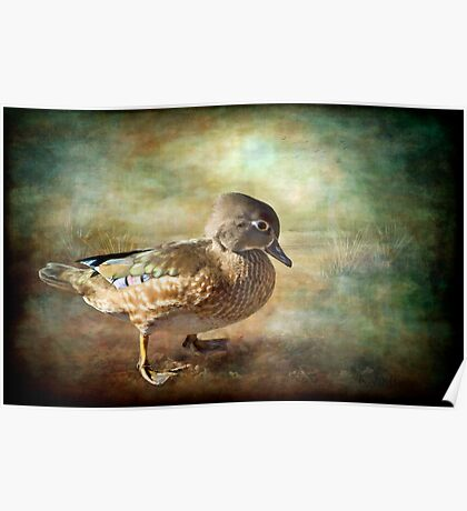 Lovely Lady - Wood Duck Poster