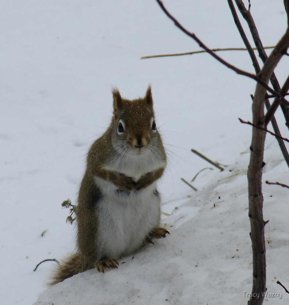 So...about those nuts you mentioned.. by Tracy Wazny