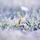 Frozen Diamonds by Matic Golob