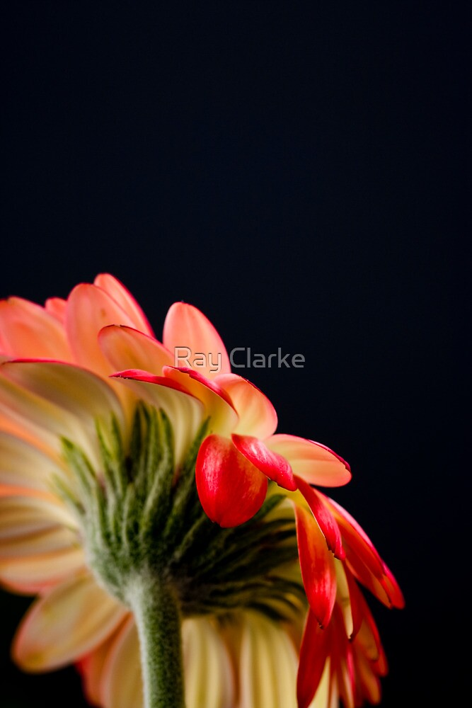 Looking Up by Ray Clarke