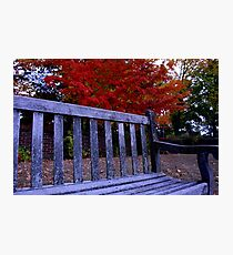 Fall Bench Photographic Print