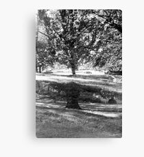 grow and grow Canvas Print