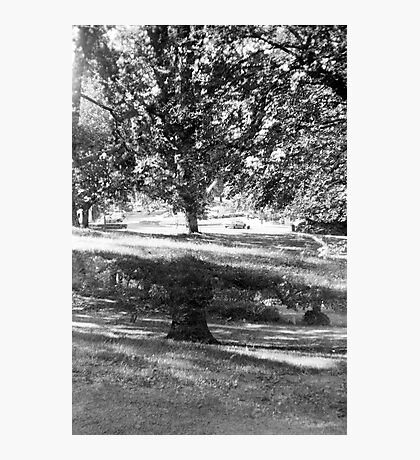grow and grow Photographic Print