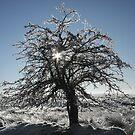 Icy tree by Jane Corey