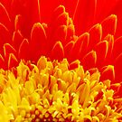 red and gold beauty by lensbaby