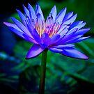 Blue Lotus by Greg Earl