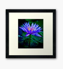 Blue Lotus Framed Print