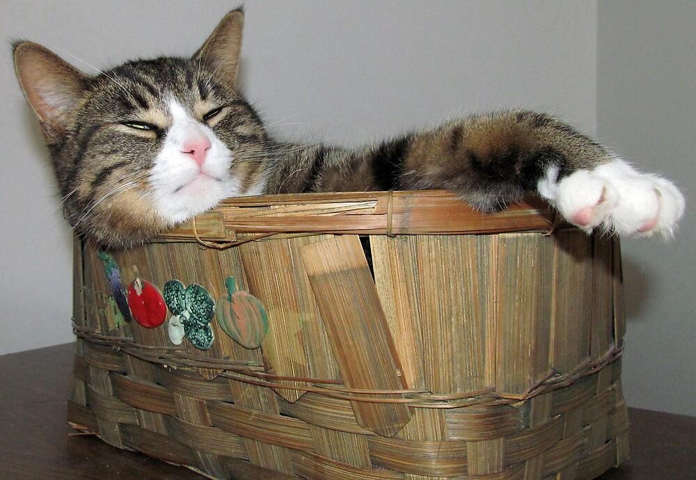 Just Rockin My Basket by nikspix