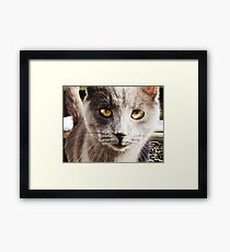 Looking Through You  Framed Print