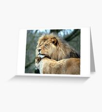 Cuddling Lions Greeting Card