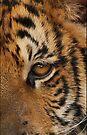 Tiger skin pattern 009 by Karl David Hill