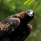 The Eagle's Eye by Sea-Change