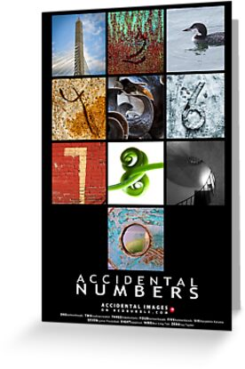 The Accidental Numbers by Susana Weber