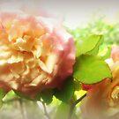 Soft Roses by Vanessa Barklay