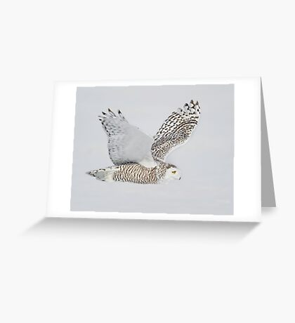 Close Fly By Greeting Card