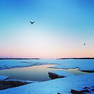 Crows Flying Over Frozen Ocean in Charlottetown PEI by nadinestaaf
