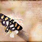 Textured Moth by Beth Mason