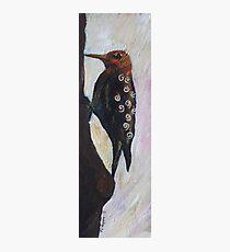 Redheaded woodpecker Photographic Print