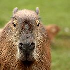 Portrait of a rather handsome capybara by Ladymoose