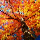 Looking Up At The Fall by browncardinal8