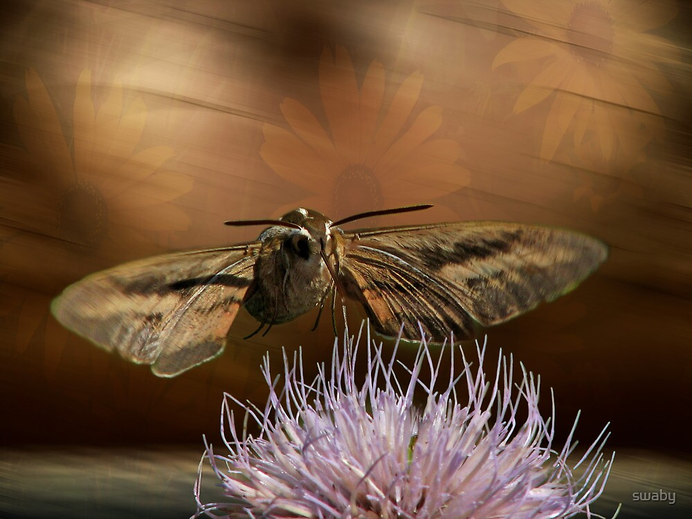 Hummingbird Moth by swaby