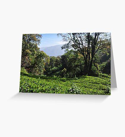 Tea Garden Greeting Card