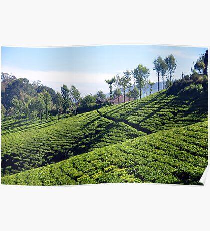 Tea Garden Poster