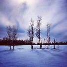 Beautiful Trees in Winter by Nadine Staaf