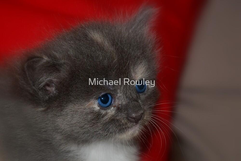 Ol Blue Eyes by Michael Rowley