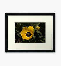 Yellow Tulip Framed Print