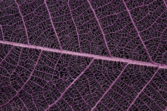 Purple Vein by Amy Dee