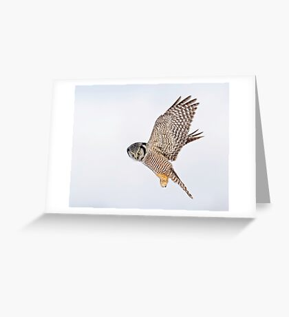 Just one look... Greeting Card