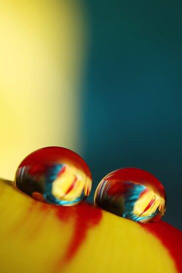 Rainbow Tulip Drops by Sharon Johnstone