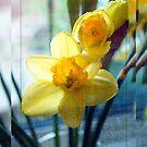 Windowsill Cheer by Astrid Ewing Photography