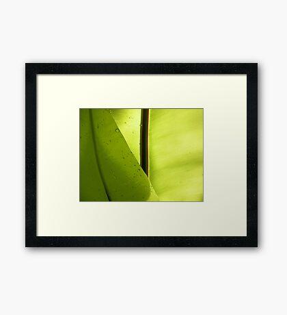 Moistured leaves Framed Print