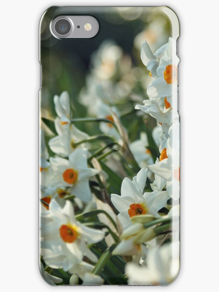 White daffodils iPhone case by Esther  Moliné