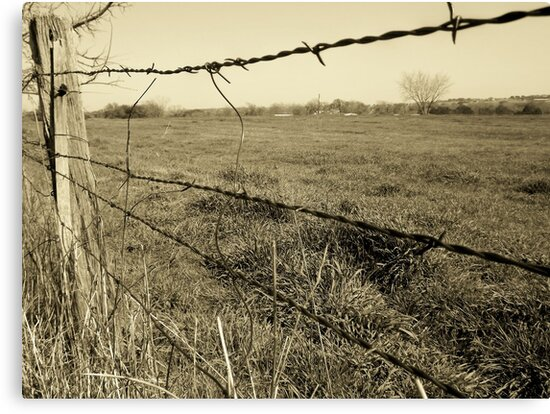 Barb Wire by Norma Chester