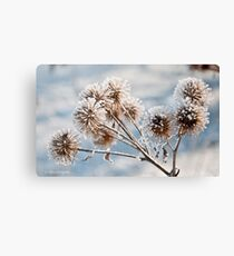 Frosty Thistle Head [Macro] Canvas Print