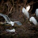 Rookery Fly-By by Joe Jennelle