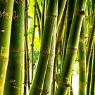 Bamboo Graffiti by YingDude