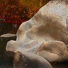 Nature' Modern Art by Barbara  Brown
