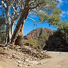 Brachina Gorge, Study #4, Wilpena, South Australia. by johnrf