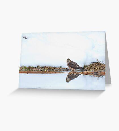 Sharp-shinned Hawk Ice Bath Greeting Card