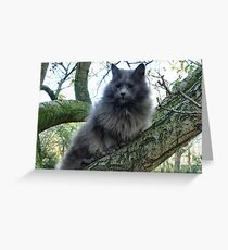 Blind Cat Kyra sitting in tree Greeting Card