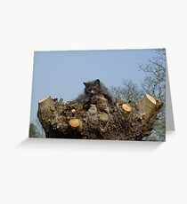Cat on Willow Tree Greeting Card