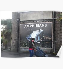 London Zoo/Reptiles House/Poster(1 of 3) -(190212)- digital photo Poster