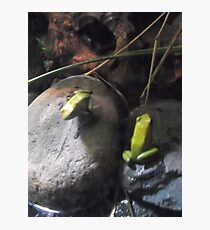 London Zoo/Reptile House/Poisonous Frogs(2 of 2) -(190212)- digital photo Photographic Print