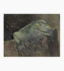 Reptile House/London Zoo -(190212)- digital photo Photographic Print