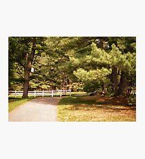 Memory Lane - MacKenzie-King Estate Photographic Print