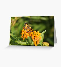 Pearl Crescent on Butterfly Weed Flowers 1 Greeting Card